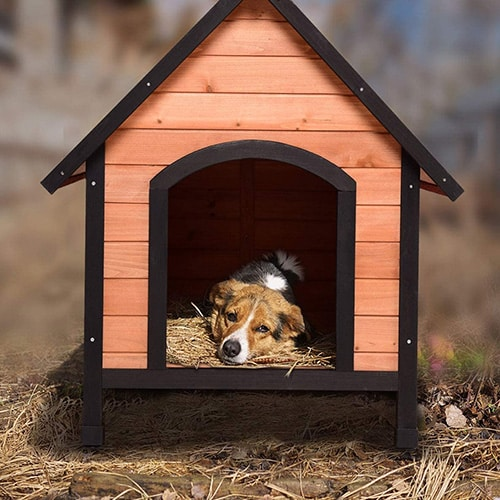 Best Wood Dog Houses